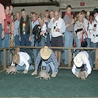 Armadillo or Pig Racing